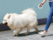 Chowana smycz dla psa Xiaomi Mija Moestar UFO 3m